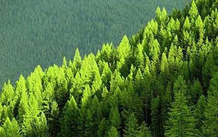 """Seminario Temuco  """"Un análisis del impacto del sector forestal en la reducción de la pobreza rural"""""""