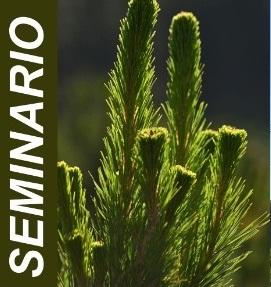 Seminario: Estado del arte de la conservación de los recursos genéticos forestales