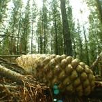 Bosques 1