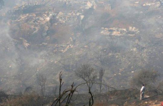 CIFAG: La eliminación de una especie no es la solución para prevenir incendios en Valparaíso.