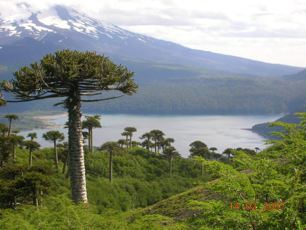 Declaración pública CIFAG sobre reducción del presupuesto para la gestión de las áreas protegidas