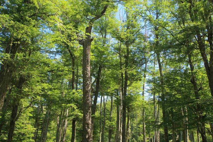 Declaración Pública sobre la necesidad de impulsar el manejo forestal sostenible de los bosques nativos de Chile